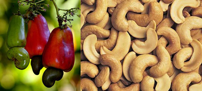 cashews shell and cashews nuts