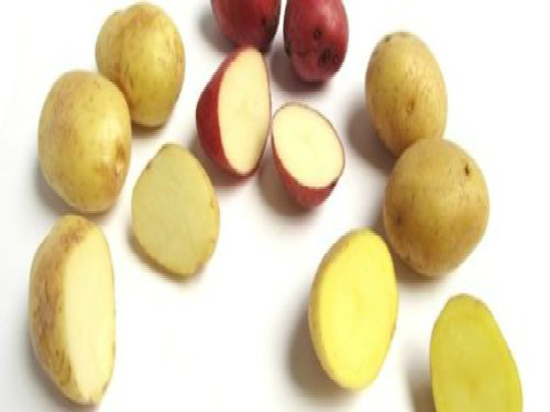 Top 5 Waxy Potatoes You Cant Do Without