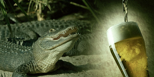 Man Pays For Beer With Four-Food Alligator