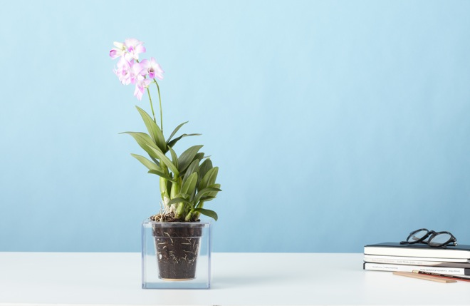 No More Overwatered Or Dead Plants With Boskke Cube