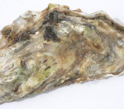 How To Eat Oyster