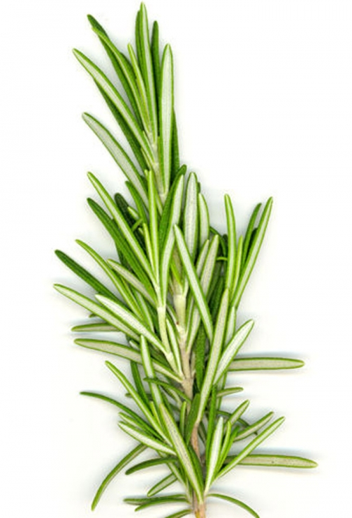 Is It Safe To Eat Rosemary During Pregnancy?