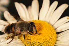 Eat Bee Pollen To Ensure Longevity And Health