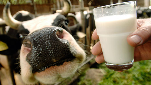 Raw Milk Wins In America