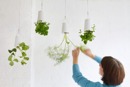 Grow Food Upside Down In Your Kitchen!