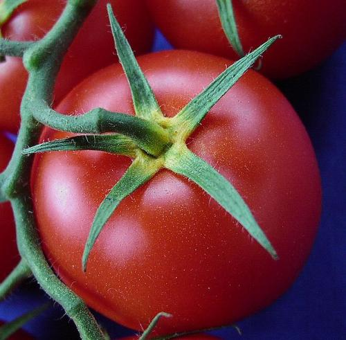Benefits Of Tomato Enzyme
