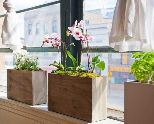 Hydroponic Windowsill To Spruce Up Your Windows