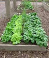 Grow your own garden!