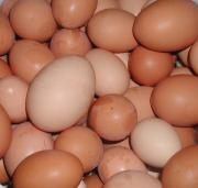 Eggs to be steamed
