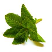 Mint used in steaming