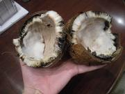 Tips to identify rotten coconut